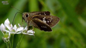 what-do-moths-eat