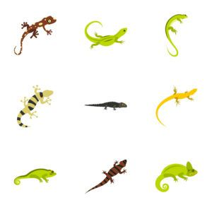 Best Home Remedies to Get Rid of Lizards and Commercial Repellents