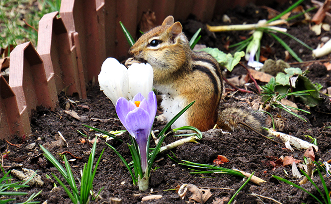 How to Get Rid of Chipmunks Naturally in Your Property