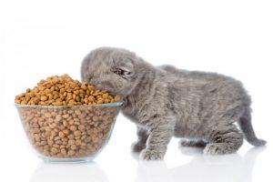 Catfoodsadvisor.com